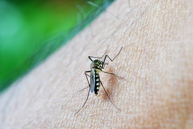 mosquito zika st barths